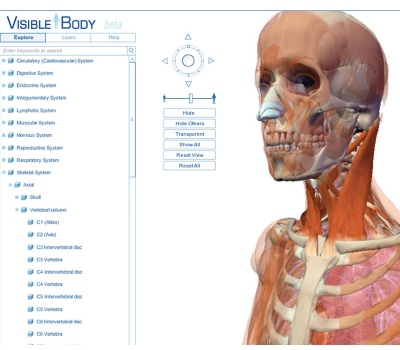 info/visible-body-duze.jpg